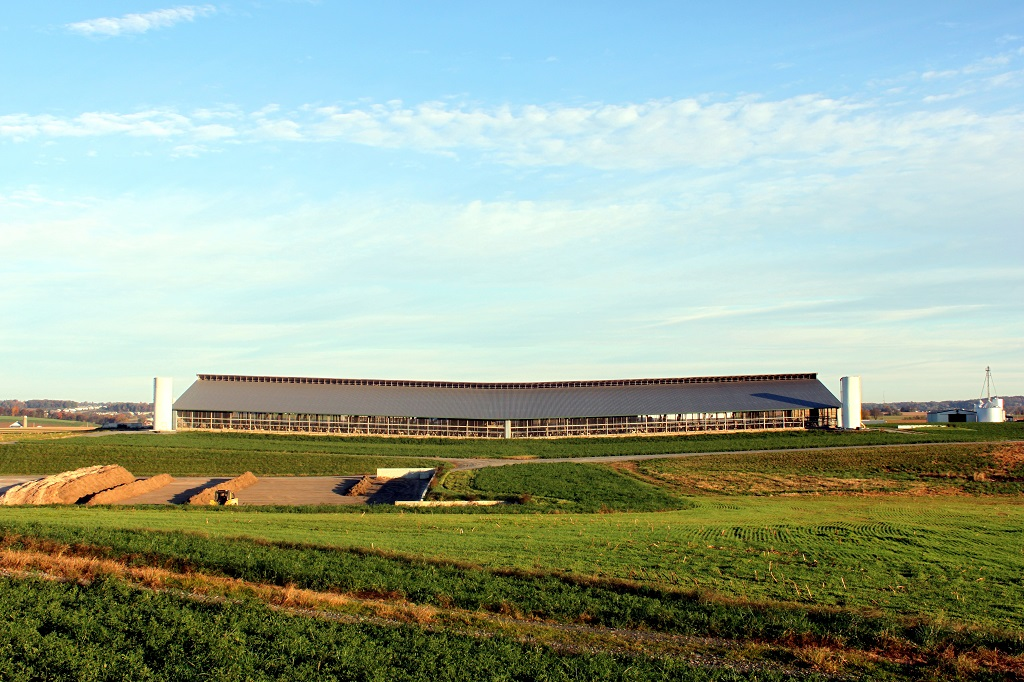 Freestall-Dairy-Barn-1