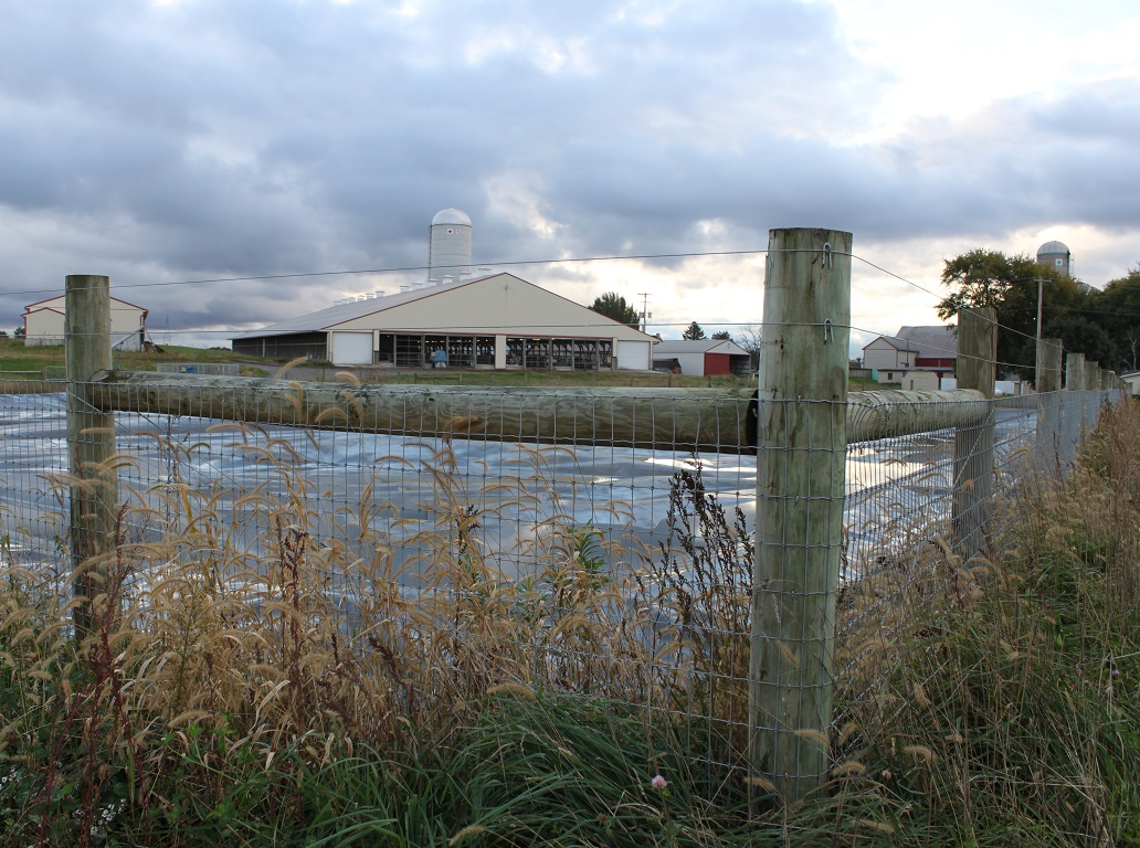Manure-Lagoon-and-Dairy-Barn